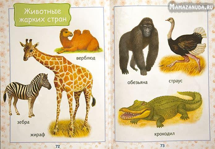энциклопедия-для-малышей-4
