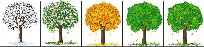 фруктовые деревья для детей картинки